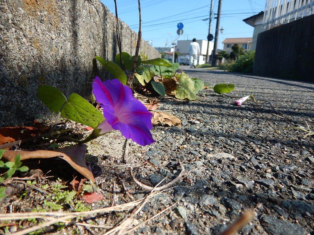 Flowers Will Bloom Real Fukushima